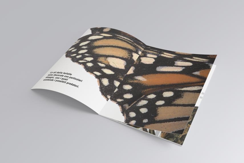 Butterfly, impaginato